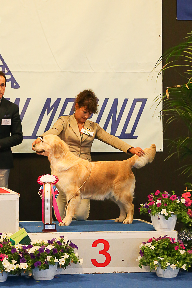 16 - SABATO - BEST IN SHOW
